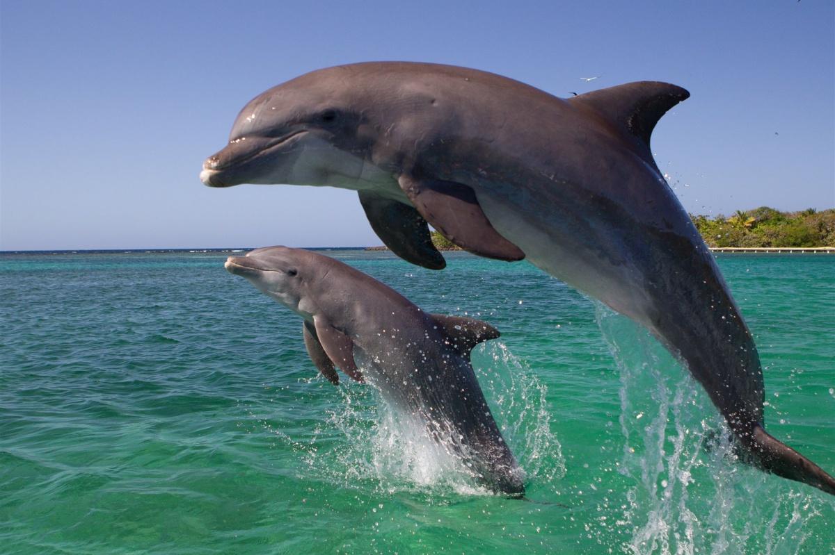 dolphin-e1484295181884